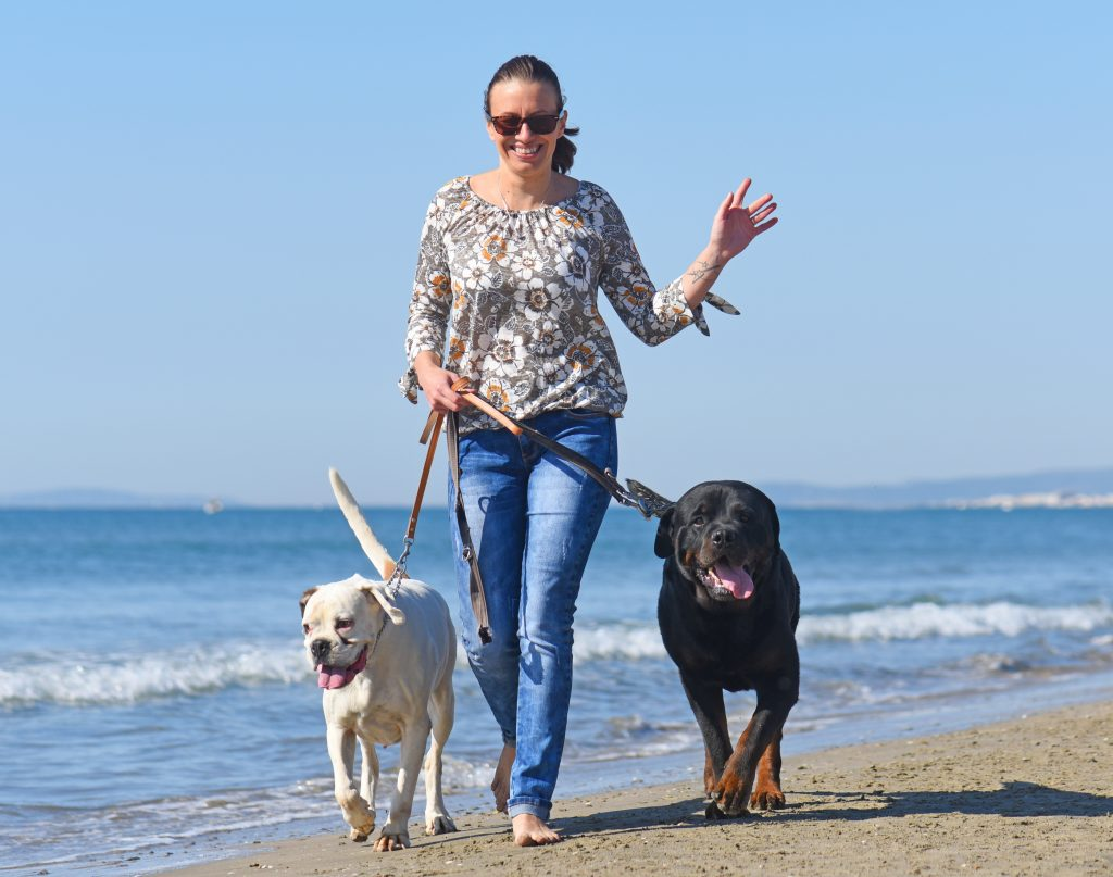 walking your dogs on the beach is a great way to stay active and to keep your brain healthy